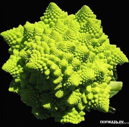 Romanescu Это близкий родственник капусте брокколи и цветной капусте. Если вы любите капусту, то этот фантастический овощ вам, несомненно, понравится. Кроме того, этот удивительный овощ, буквально напичкан антиоксидантами.