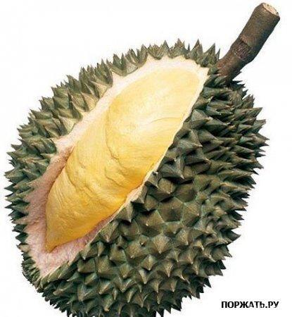 Дурио Плод дурио напоминает, какой-то «инопланетный» фрукт размером с футбольный мяч, покрытый жёсткой колючей шкуркой. Мякоть внутри фрукта бледно-жёлтого цвета. Запах похож на грязные ношенные носки, гниющее мясо, или сточные воды (выбирайте, что вам больше нравится). Тем не менее, этот фрукт на вкус изумителен и изящен. Первый европейский исследователь, который в 1700-ых годах впервые попробовал этот фрукт назвал его «королём фруктов». «Стоило отправиться в опасное путешествие только ради того, чтобы попробовать этот фрукт» – добавил отважный путешественник.