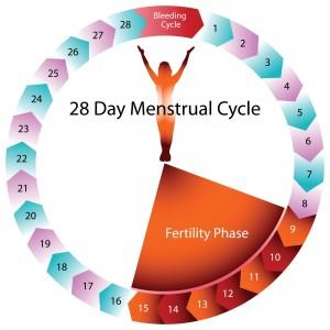 1-Я ФАЗА: в период со 2-го по 14-й день цикла в твоем организме постепенно увеличивается количество женских половых гормонов эстрогенов, которые ускоряют все обменные процессы (в том числе и метаболизм).