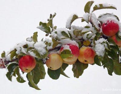 Яблочный уксус от целлюлита и растяжек