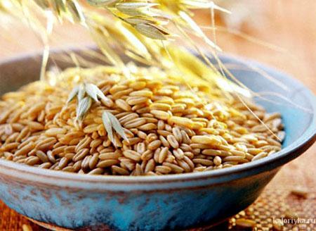 Овес — это не только любимое лошадиное лакомство, но и чрезвычайно полезный для людей продукт. В овсяных зернах в идеальном соотношении содержатся углеводы, белки и жиры, что позволяет врачам рекомендовать овес в качестве продукта для диетического питания. Также овес содержит витамины группы В и множество микроэлементов, например, калий, магний, железо, хром, цинк, марганец, йод.