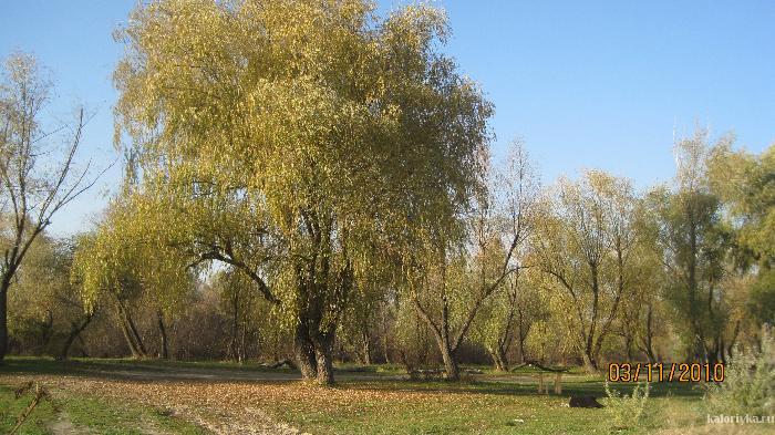 Осень в Мелиховке