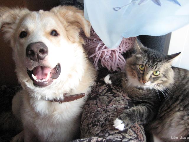 Мой Фредюшка! И кот Боня)